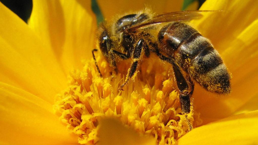 nivel de polen en el aire consulte la intensidad de la alergia en su provincia