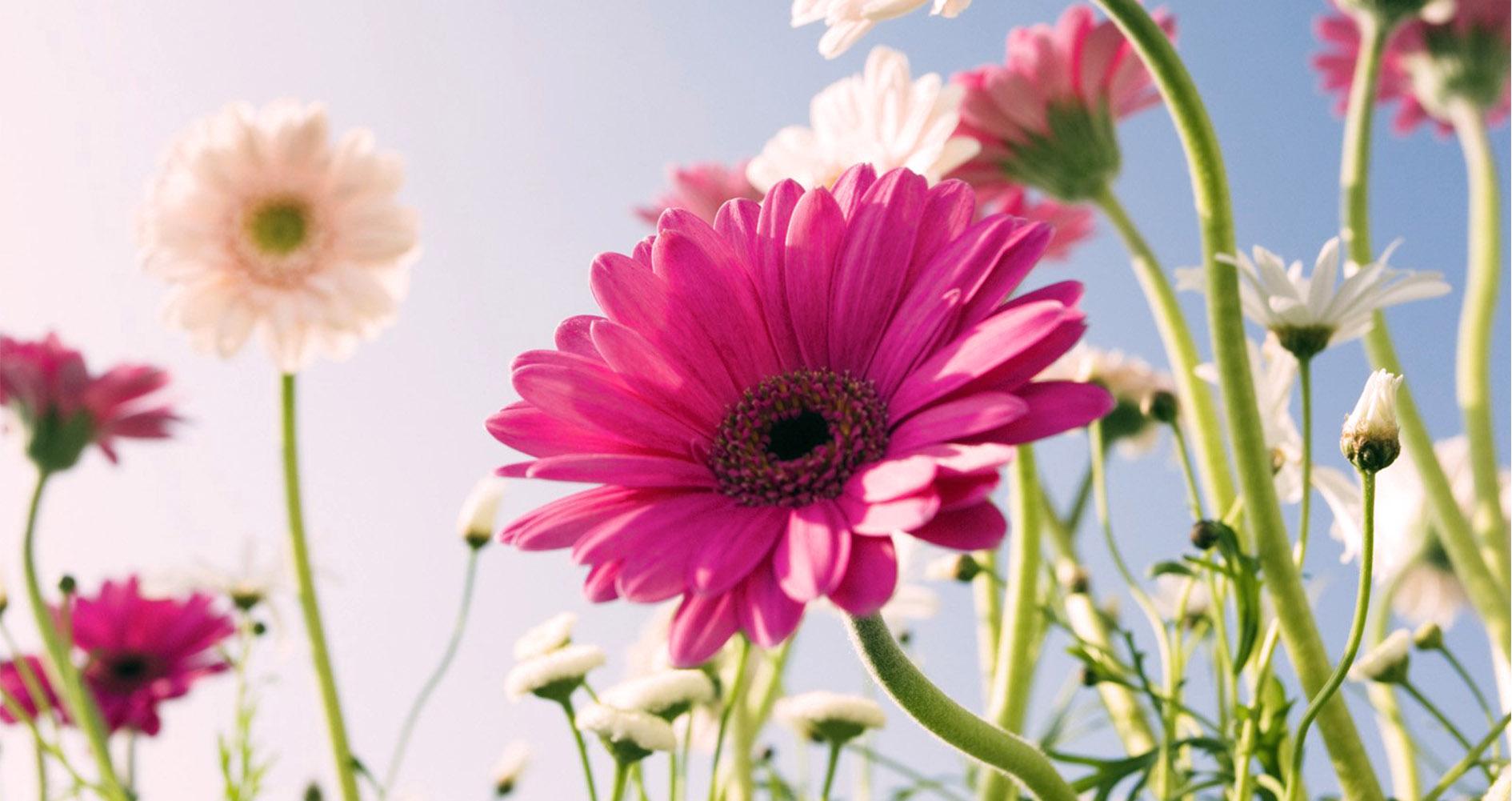 conjuntivitis en primavera