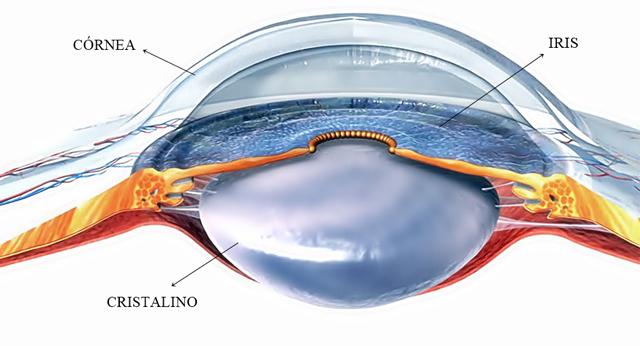 sinequia ocular