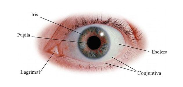 pinguecula partes del ojo